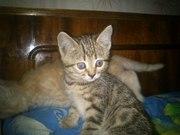 Милые котята!!!!!!!!!